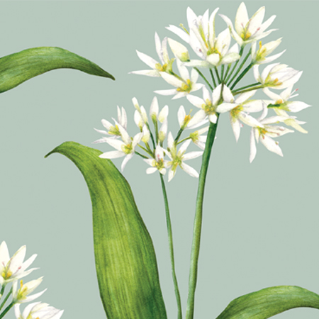 Wild Garlic Pattern