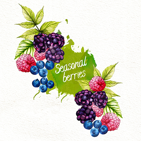 food-illustration-seasonable-berries