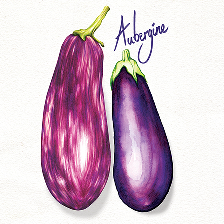 Food Illustration Aubergine