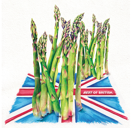 Food Illustration Best of British Asparagus
