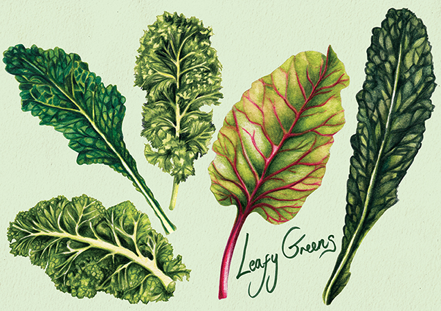 Food Illustration Leafy Greens