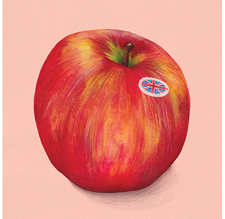 Food illustration British Apples