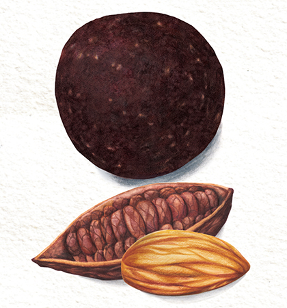 Food illustration Cacao and Almond packaging