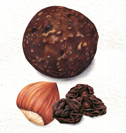 Food illustration Hazelnut and Raisin packaging