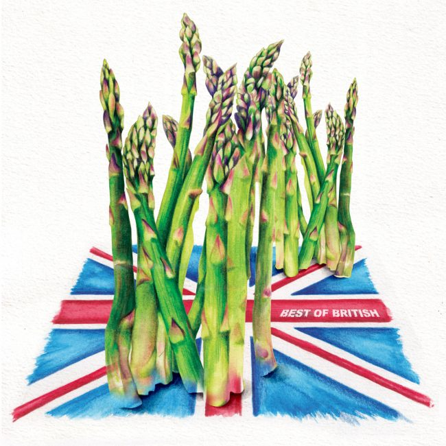 Food-illustration-British-asparagus-best-of-british healthy eating healthy lifestyle plant based diet