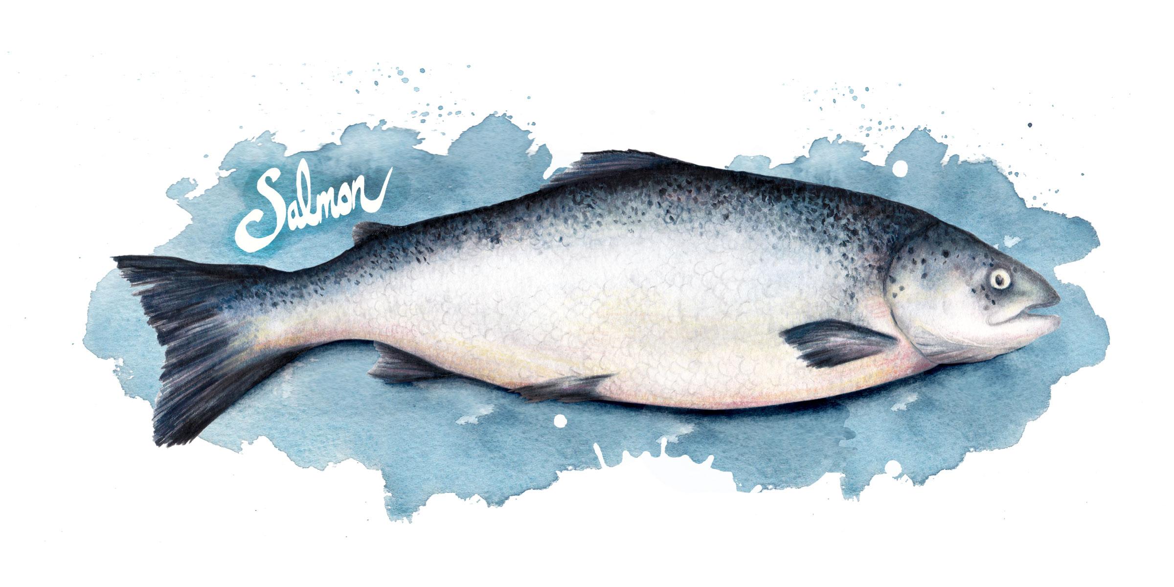 Food-illustration-salmon