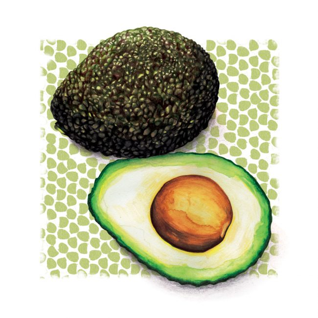 Advocado-food-illustration