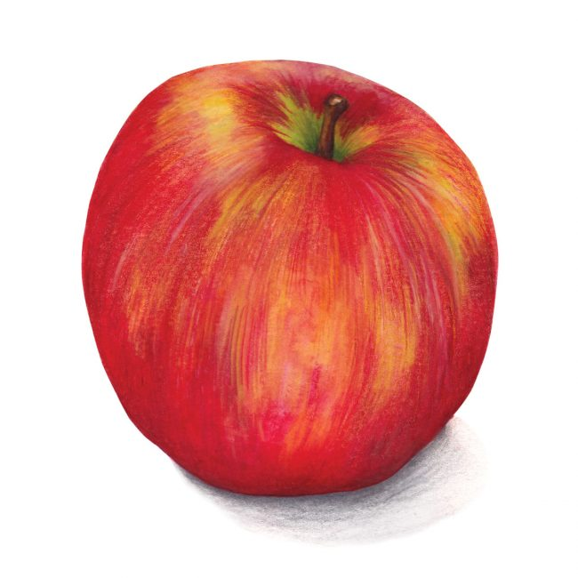 Food-illustration-apple-healthy-eating-fruit