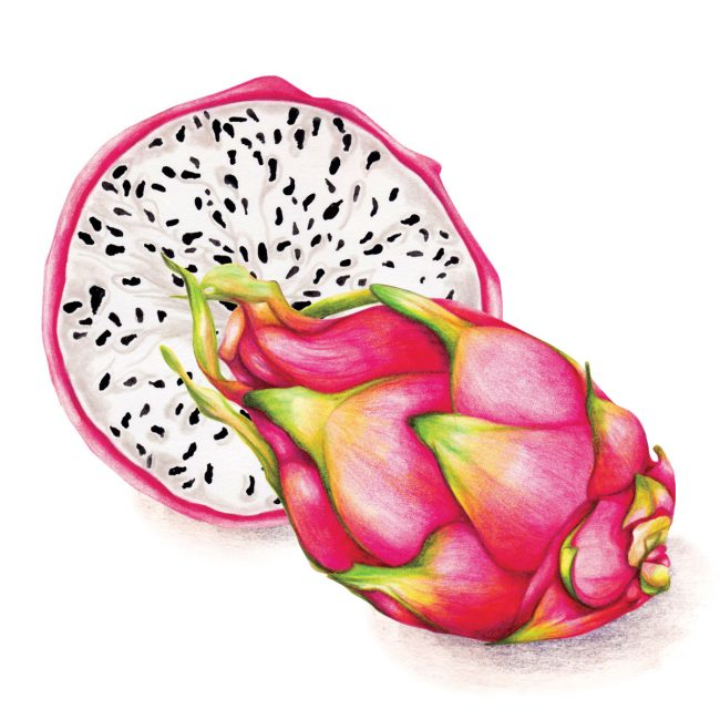 Food-illustration-dragon-fruit-healthy-lifestyle-vegan
