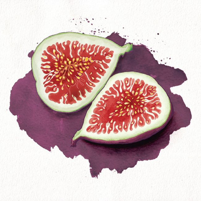 Food-illustration-figs-healthy-eating-fruit