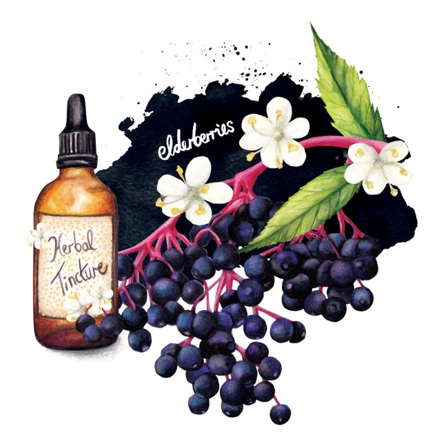 Food-illustration-herbal-remedy-healthy-lifestyle food is medicine