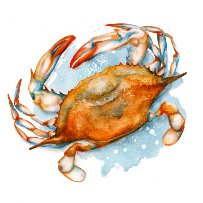 Food-illustration-watercolour-soft-shell-crab blue crab seafood illustration