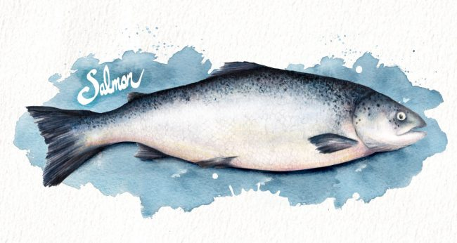 Food-illustration-wild-salmon-fresh-fish