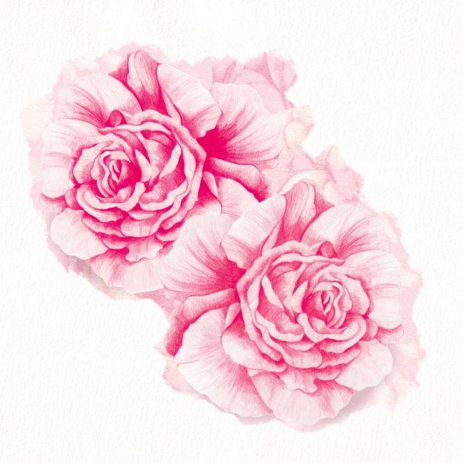 Nature-illustration-roses-botanical-flowers-garden