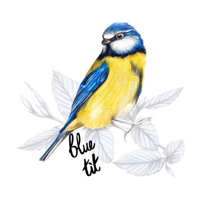 animal-illustration-blue-tit-british-birds-wildlife