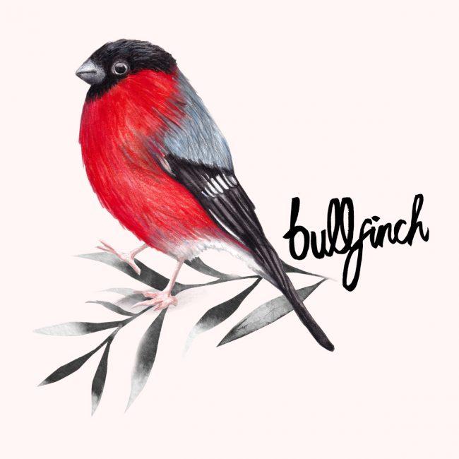 animal-illustration-bullfinch-british-birds-wildlife