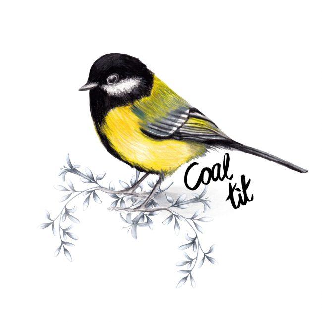 animal-illustration-coal-tit-british-birds-wildlife