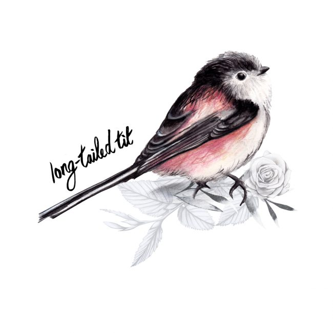 animal-illustration-long-tailed-tit-british-birds-wildlife