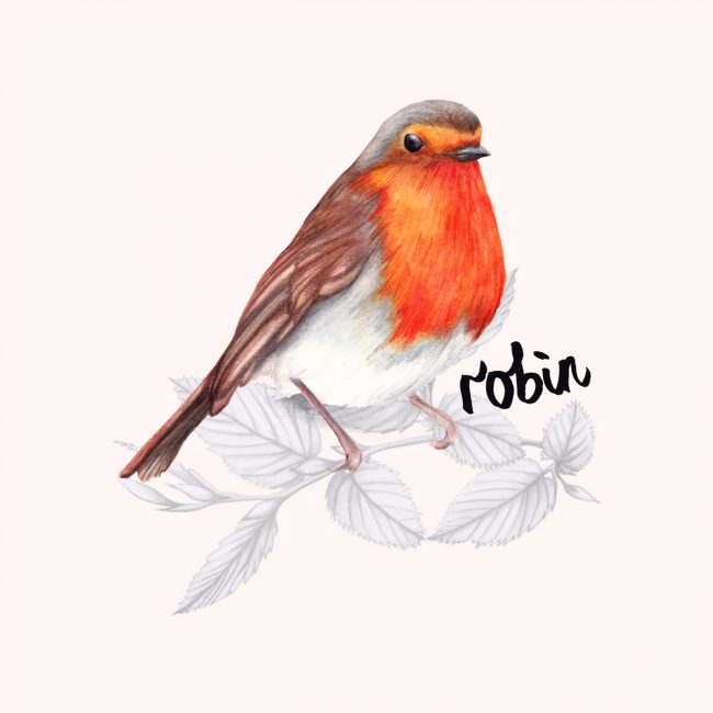 animal-illustration-robin-british-birds-wildlife