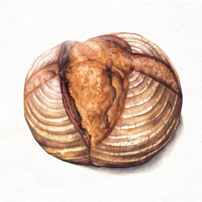 food-illustration-artisan-bread-baking