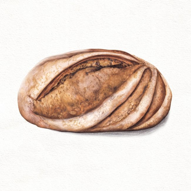 food-illustration-artisan-bread-baking2
