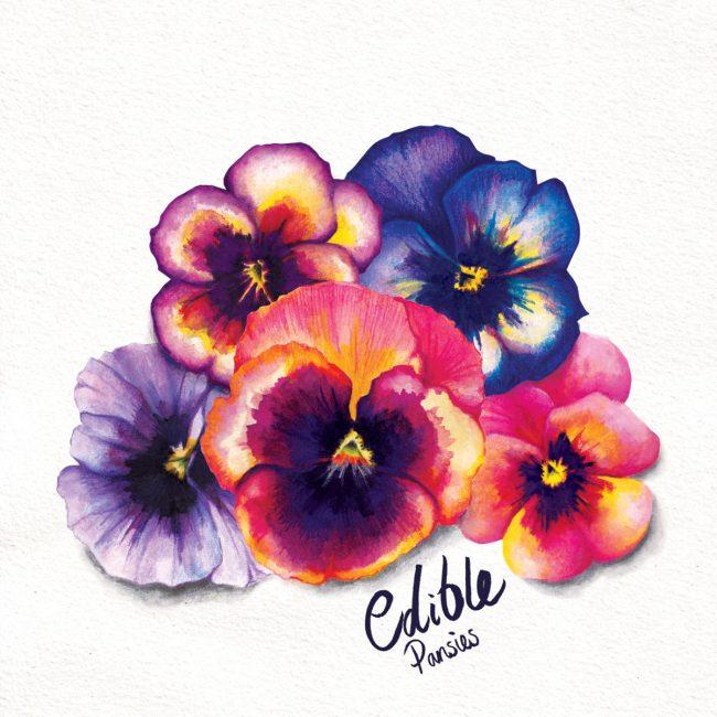 food-illustration-edible-pansies-herbs-kitchen-garden copy