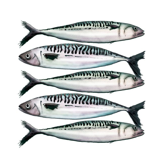 food-illustration-mackerel-fish-omega-oil-healthy-eating