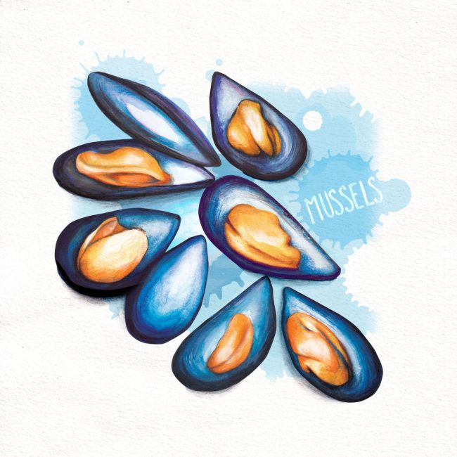 food-illustration-mussels-shellfish-seafood