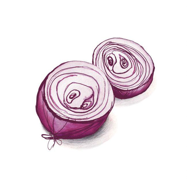 food-illustration-red-onions