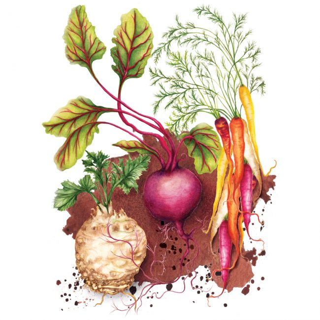 food-illustration-root-vegetables-healthy-eating plant based diet nutrition food is medicine