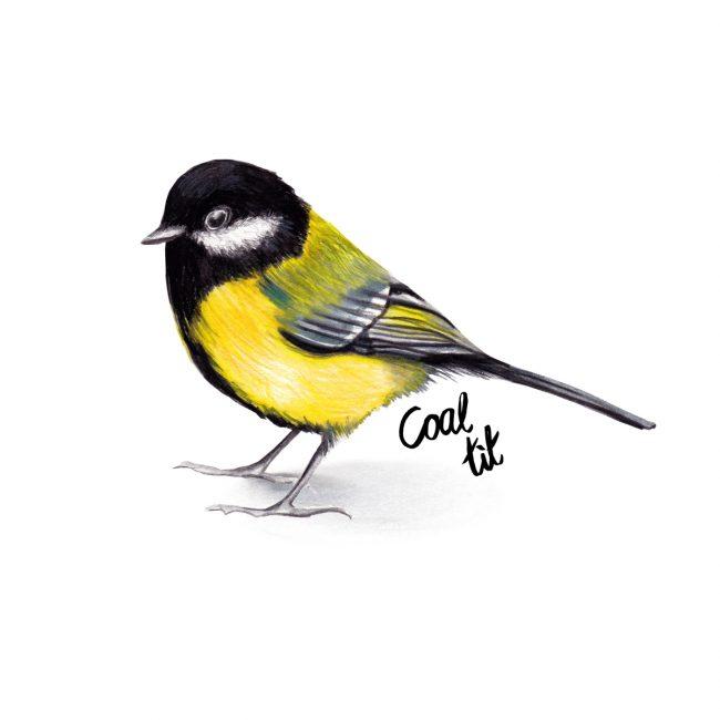 Watercolour bird illustration-coal-tit-british-birds-wildlife animal art