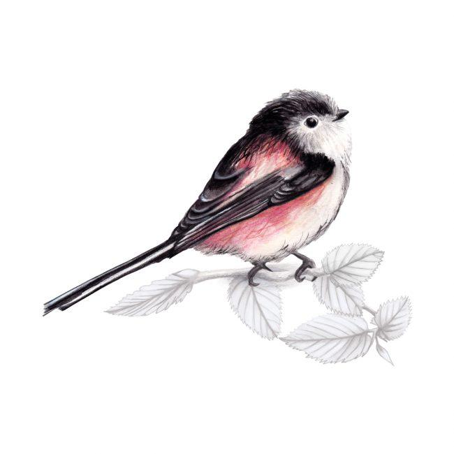 Watercolour bird illustration-long-tailed-tit-british-birds-wildlife animal art