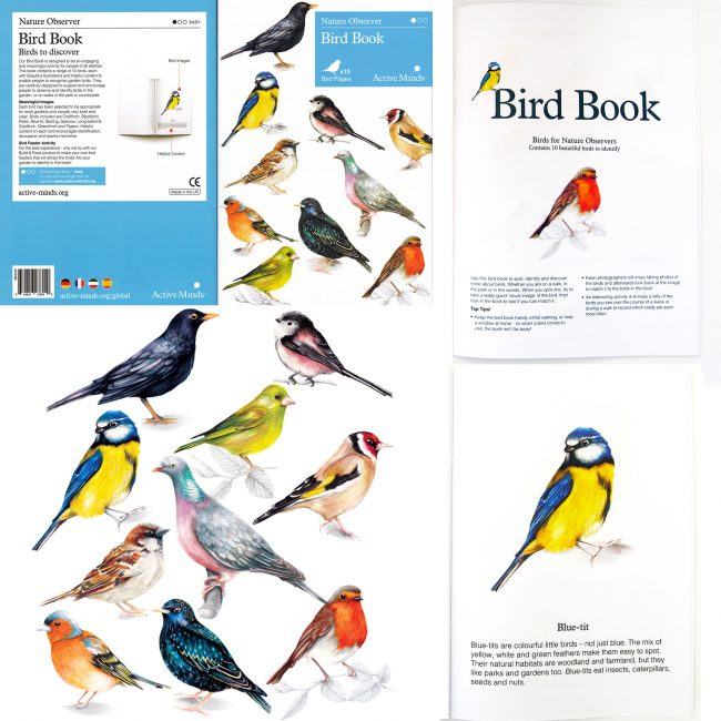 Watercolour bird illustrations for Active mind nature observer bird book