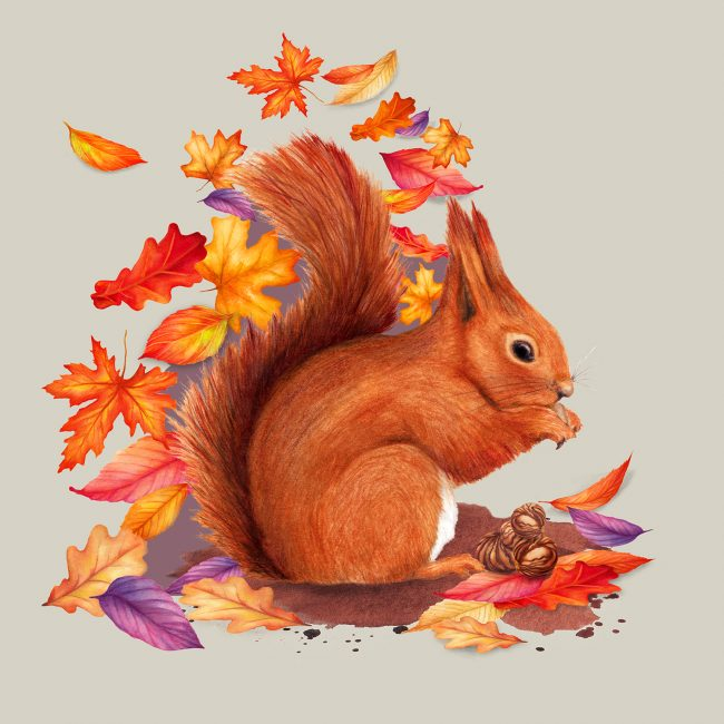Red squirrel watercolour illustration British wildlife autumn leaves animal art