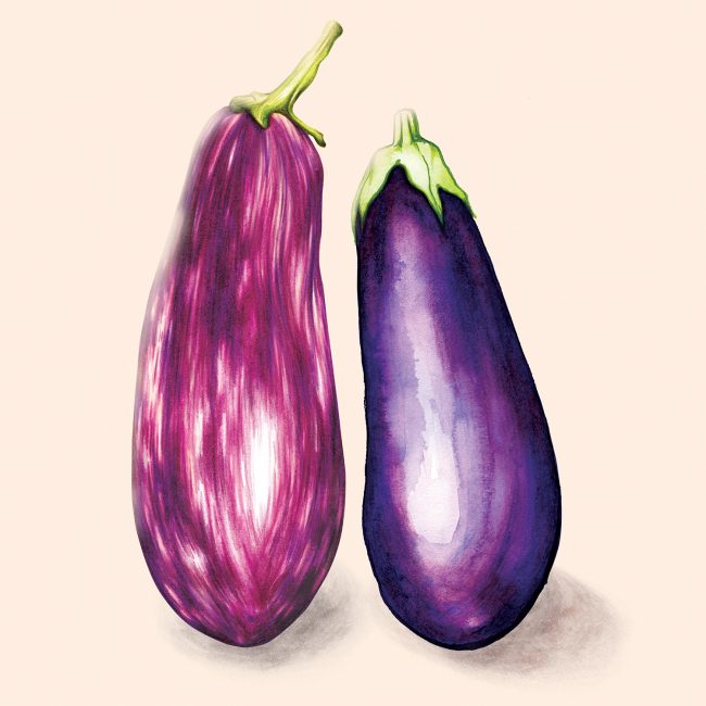 watercolour-food-illustration-aubergine-eggplant-vegetables-healthy-eating