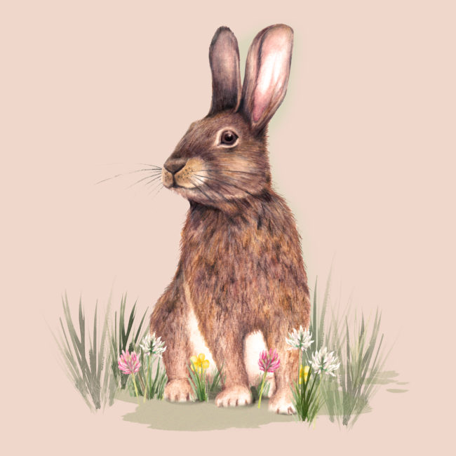watercolour rabbit animal illustration