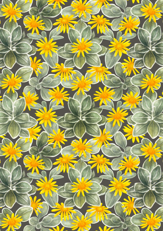 Senecio sunshine floral watercolour pattern