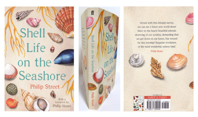 Shell-life-on-the-seashore watercolour shell book illustration