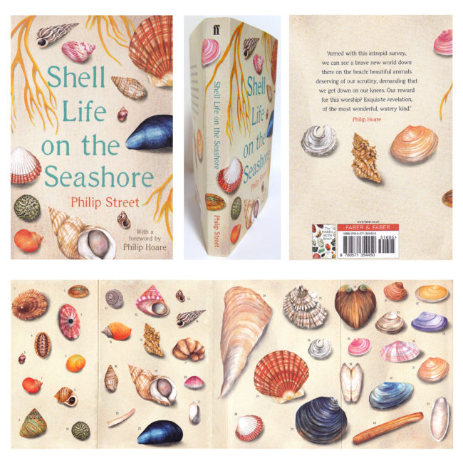 Shell-life-on-the-seashore-watercolour-shell-illustrations book cover illustration