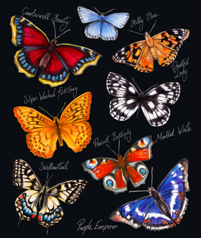 watercolour animal illustration butterfly collection wildlife