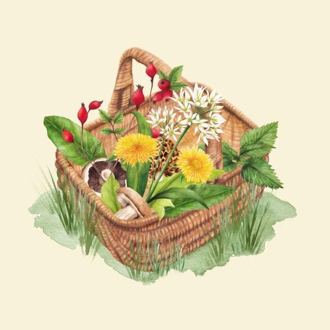 Foraging basket wild food watercolour nature illustration
